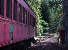 The Skunk Train